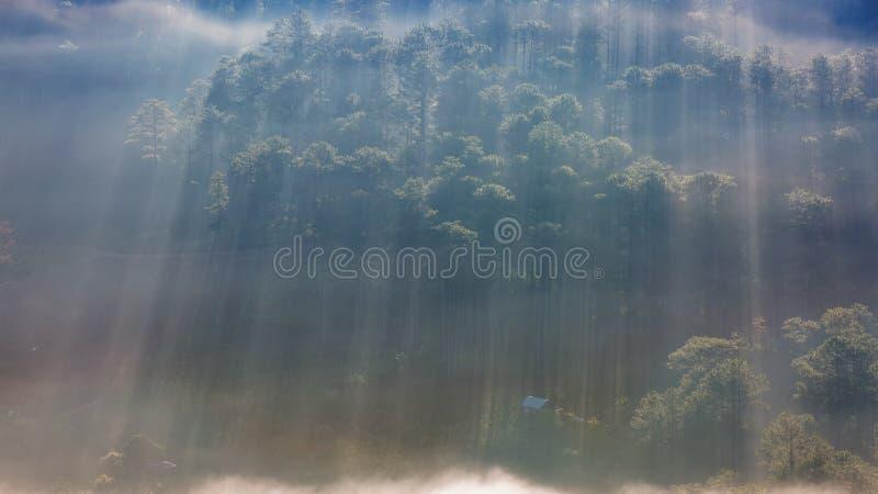 Bestes Foto der Natur mit Sonnenstrahlen, des Sonnenlichts im Wald und der kleinen Häuser am Dämmerungsteil 8 lizenzfreies stockfoto