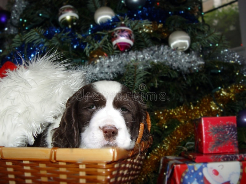 Bestes Weihnachtsgeschenk stockbild