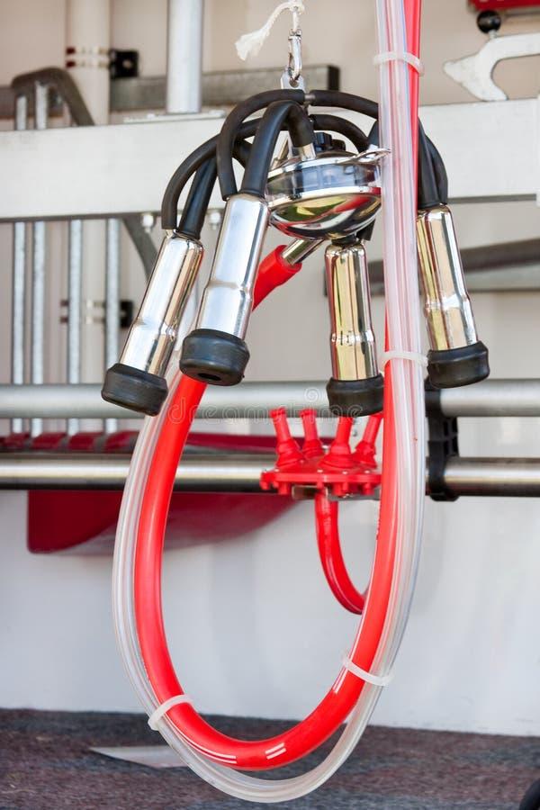 Bestiame che munge strumentazione con tubazione rossa luminosa fotografia stock