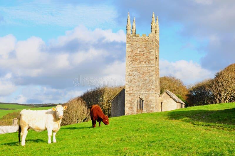Bestiame e chiesa di Morwenstowe, Devon, Inghilterra fotografie stock libere da diritti