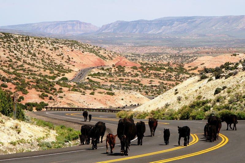 Bestiame portato affinchè inverno abbassino sbarco fotografia stock libera da diritti