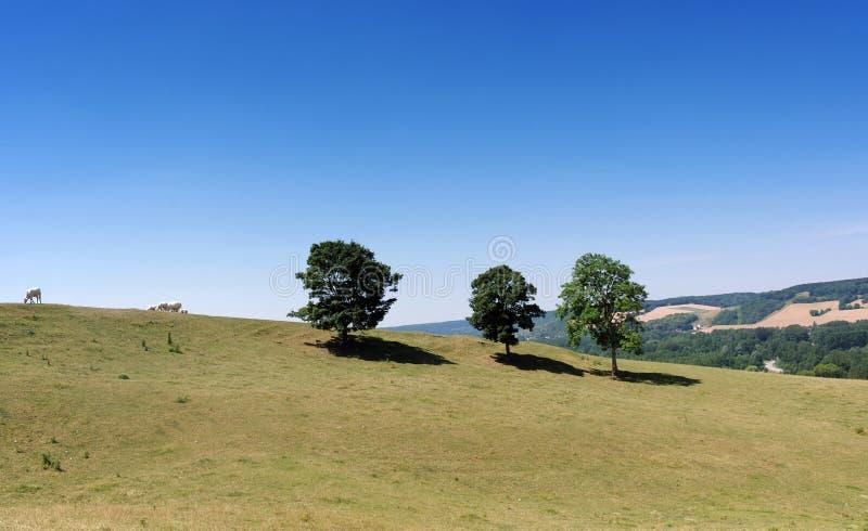 Bestiame sulle colline del parco naturale regionale francese di Vexin fotografie stock libere da diritti