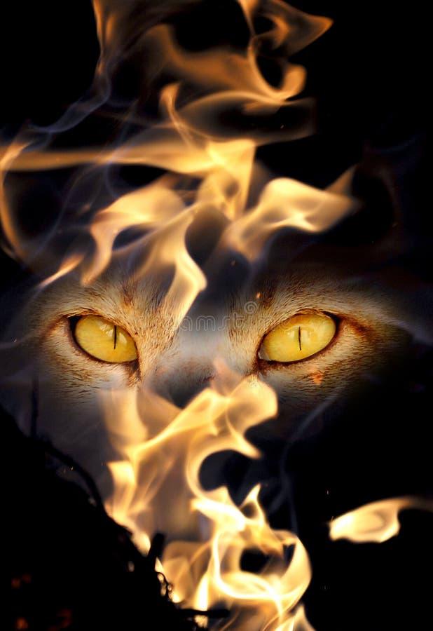 bestii oczy