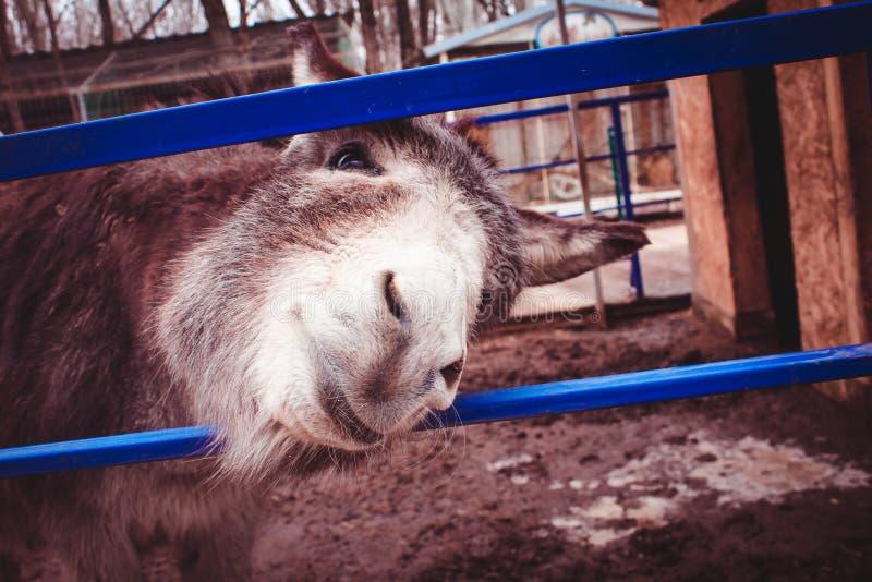 Bestii zwierzęcego gospodarstwa rolnego ślepuszonki dom obrazy royalty free