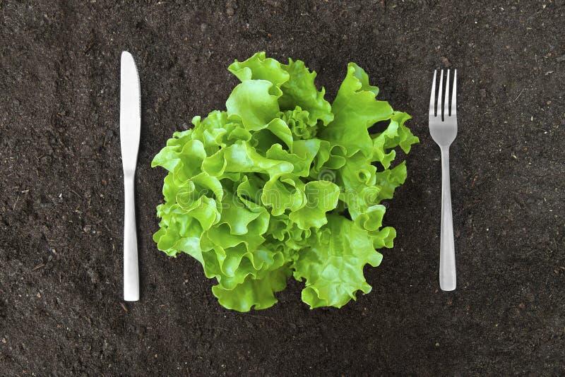 Bestreichen Sie Kopfsalatsalat im Boden mit Gabel und Messer mit Butter stockfoto