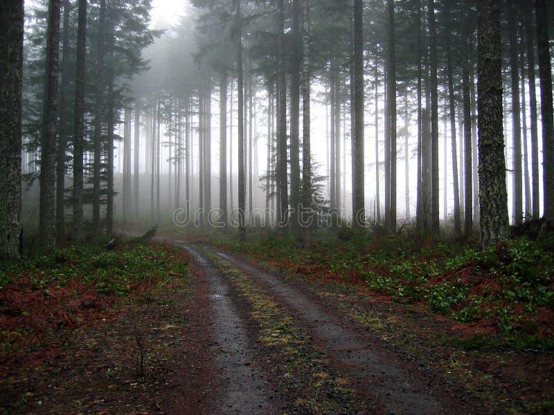Bestreuen Sie Straße in den Nebel mit Kies lizenzfreies stockfoto