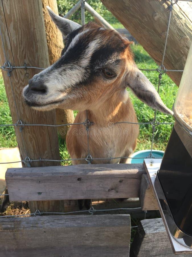 Besuch auf Bauernhof lizenzfreie stockbilder