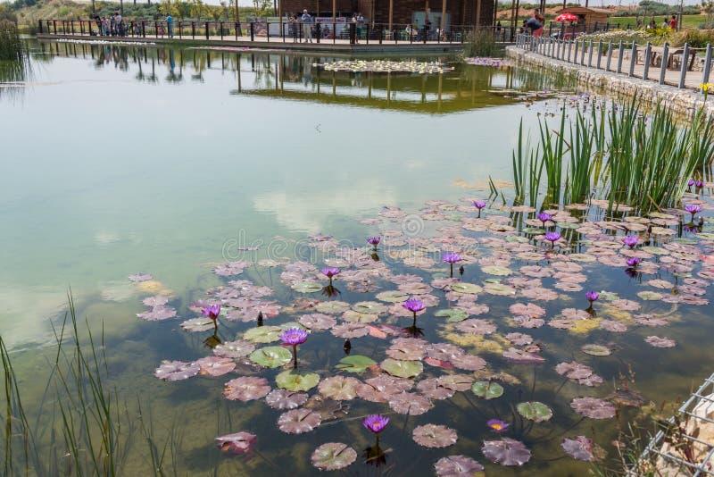 Besuch zu Hiriya (Ariel Sharon-Park) stockfotos