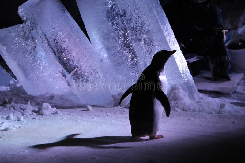 Besuch zur Biohaube von Montreal - Pinguine stockfoto