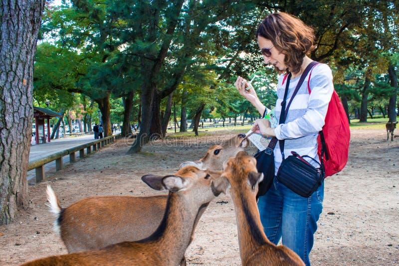 Besucher bietet Kekse an sika Rotwild in Nara, Japan an lizenzfreies stockbild