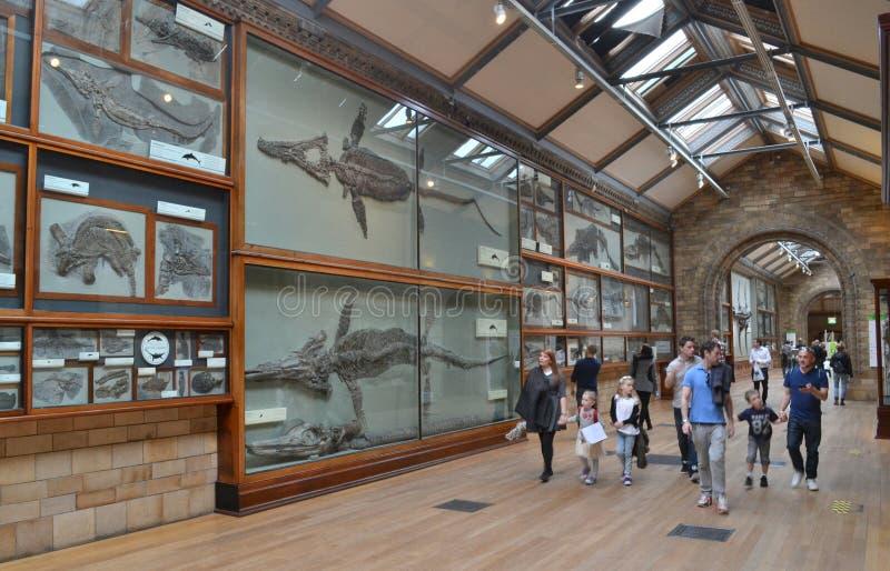 Besucher-Naturgeschichtliches Museum London stockfotos
