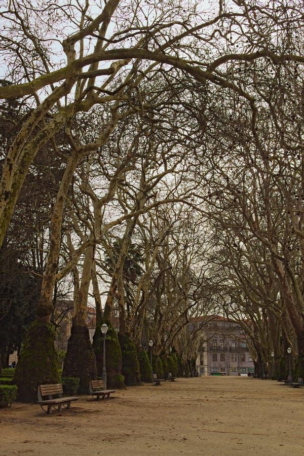 Betäubungslandschaftsansicht der langen Gasse mit hohen Bäumen im Park Porto-Stadtzentrum Reisen- und Tourismuskonzept Porto, Por stockfotos