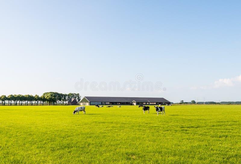 Beta kor på en lägenhet beta fotografering för bildbyråer
