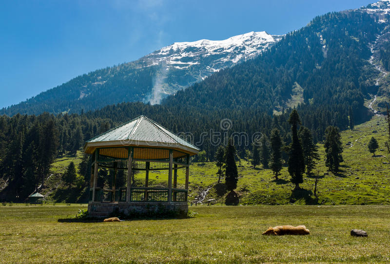 Betaab dal, Pahalgam, Jammu and Kashmir, Indien royaltyfri foto