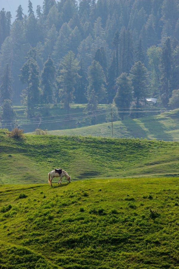 Betande häst, berglandskap arkivbild