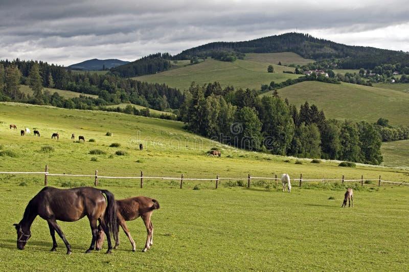 Betande hästar i en bergäng royaltyfria foton