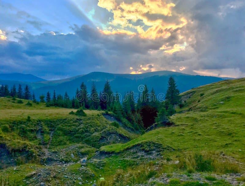 Betar, berg, granträd och moln i solnedgångljus arkivbilder