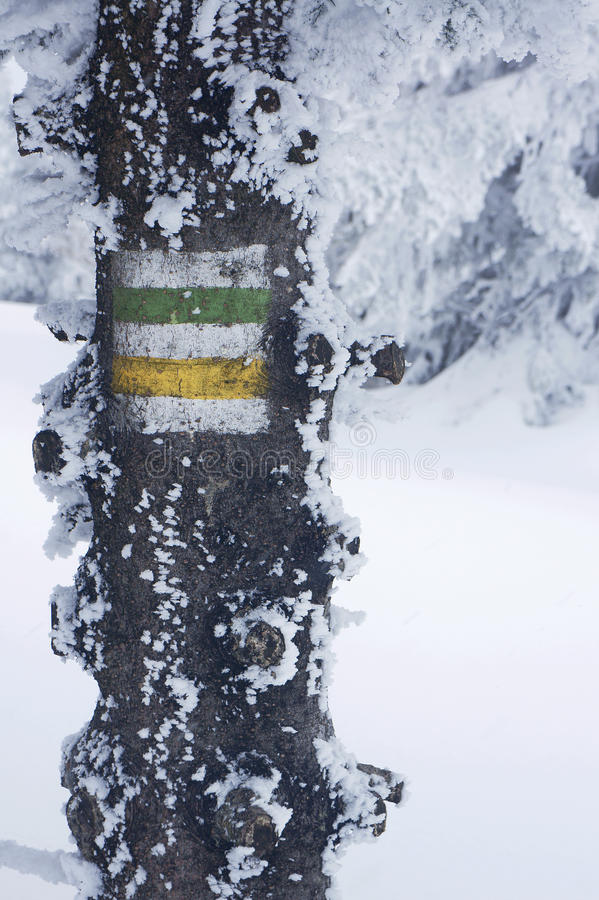 Beteckning av den turist- slingan på ett träd royaltyfri fotografi