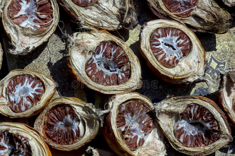 Betel nut under the sun stock images