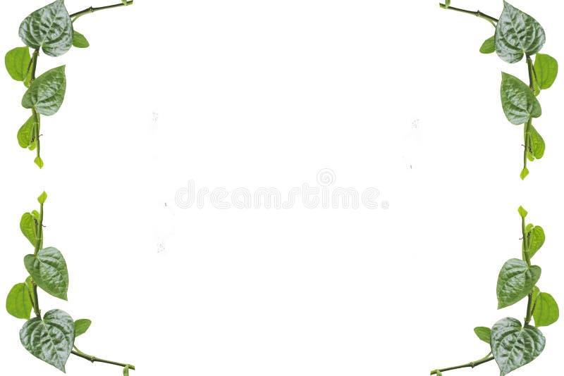 Betel-Pfeifer stock abbildung