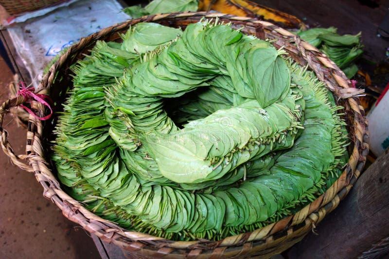 betelsidor, Myanmar arkivfoton