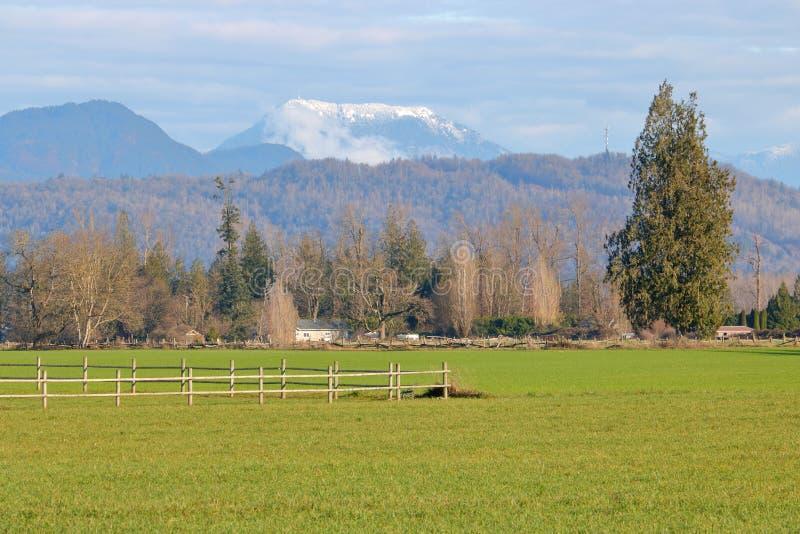 Betesmark- och boskapområde royaltyfria bilder