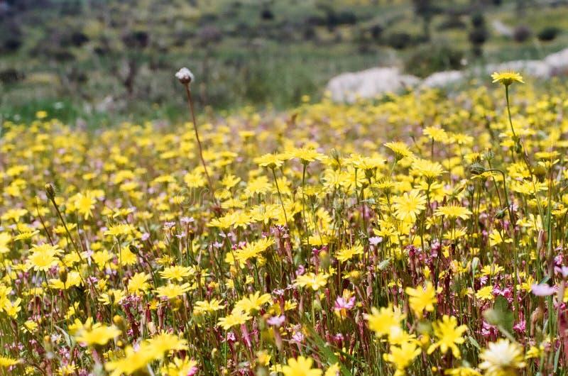 Betesmarks klocka som blommorna växer arkivfoto