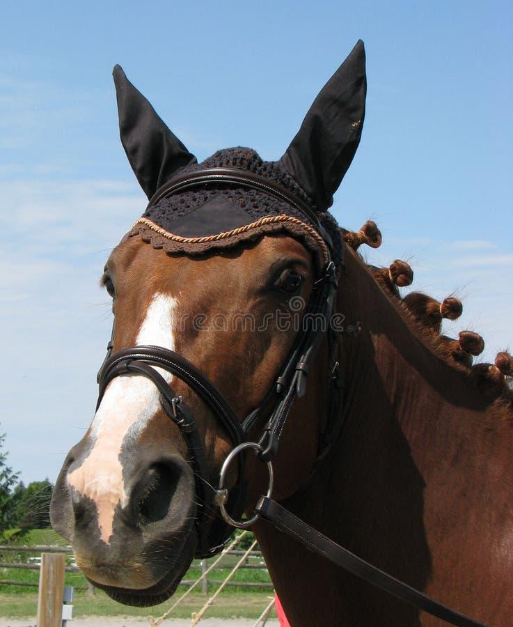 Beteugeld paard stock fotografie