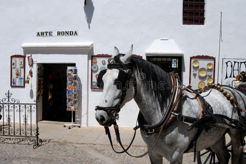 Beteugeld paard buiten een toeristenwinkel in het arenagebouw, Ronda, Spanje stock foto's