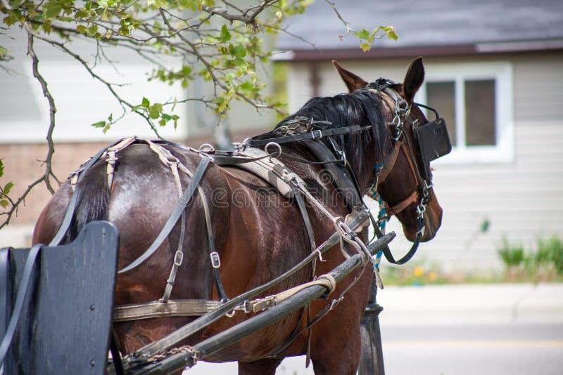 Beteugeld Paard door de Weg royalty-vrije stock afbeeldingen