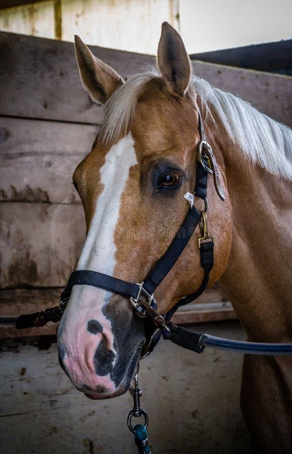 Beteugeld paardclose-up royalty-vrije stock foto