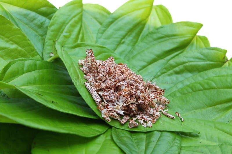 Betli liście i pokrojona areki dokrętka zdjęcia stock