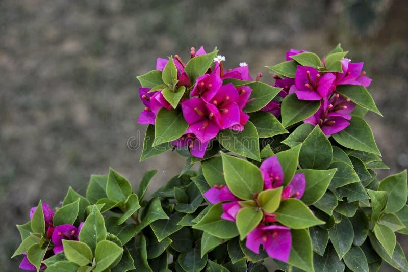 Betonad rosa blomma - 6 royaltyfria foton