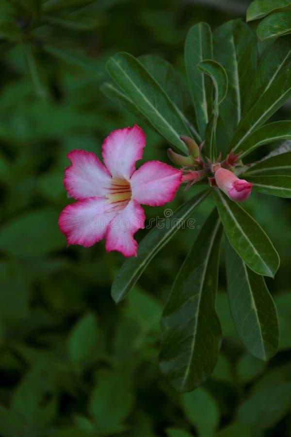 Betonad rosa blomma - 14 royaltyfri fotografi
