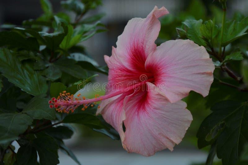 Betonad rosa blomma - 21 arkivbild