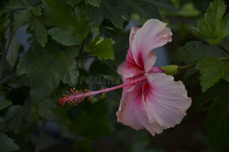 Betonad rosa blomma - 2 arkivfoto