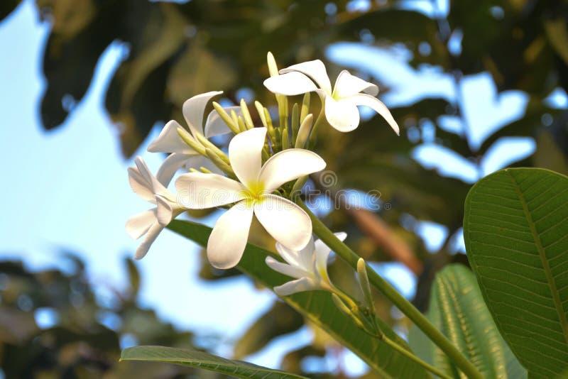 Betonad vit blomma - 3 arkivbild