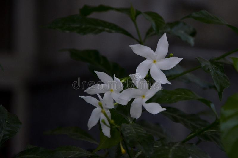 Betonad vit blomma - 5 royaltyfri bild