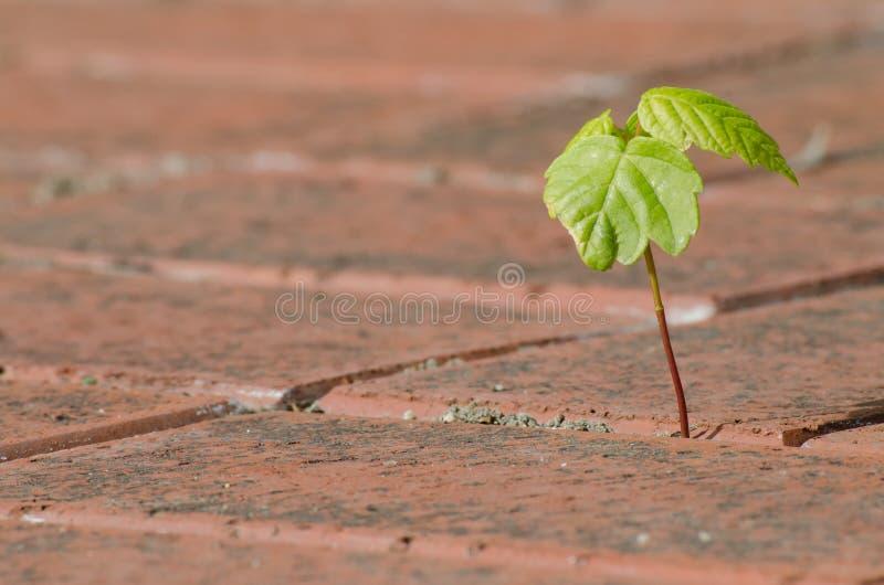 betong som ut växer växten royaltyfri fotografi