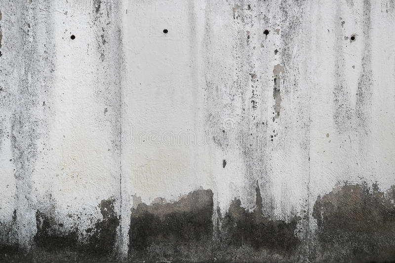 Betongvägg med grungetextur och gröna alger för mossa, textur royaltyfri fotografi