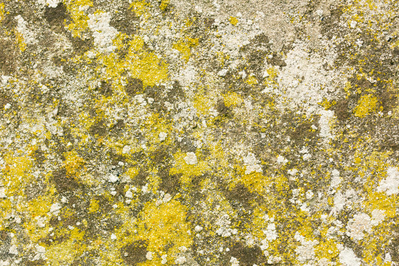 Betongvägg som täckas i svamp, mossa och laver royaltyfria bilder