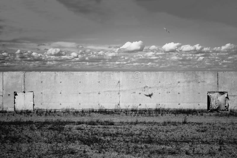 Betongväggen på fält och flyget sväljer i himmel Svart och whit arkivfoton