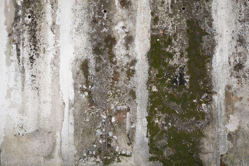 Betonowa ściana z grunge teksturą i mech zielonymi algami, tekstura zdjęcie royalty free