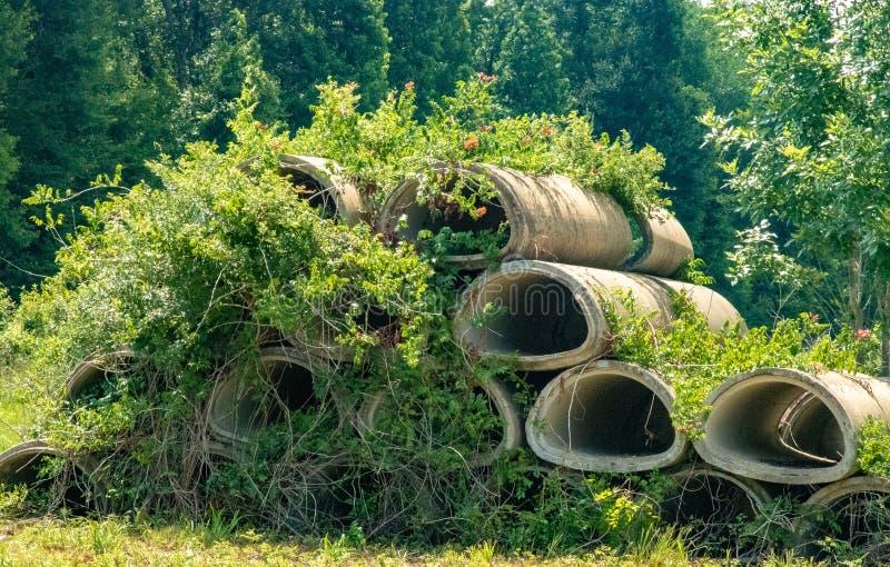 Betonowi culverts w segregujących winogradach zdjęcia stock