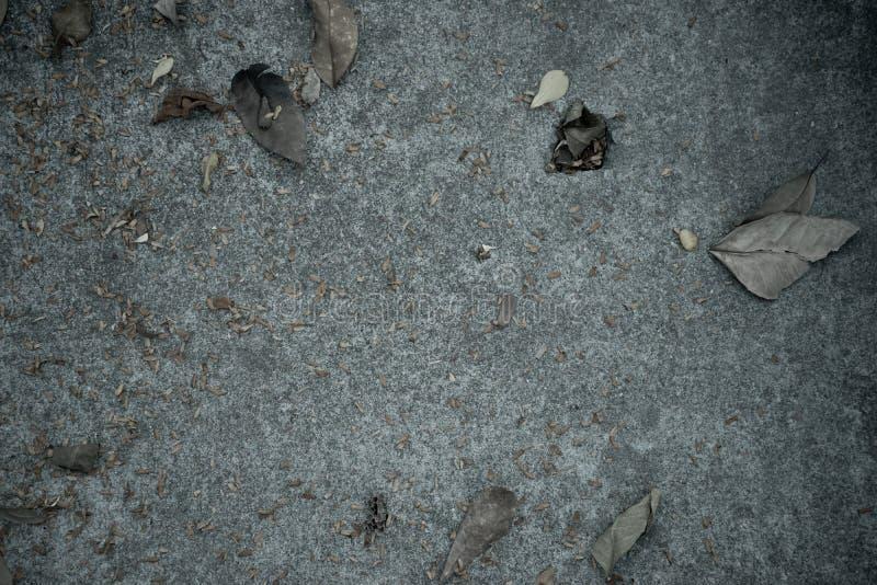 Betonowy podłogowy nakrycie wysuszonymi liśćmi obraz royalty free