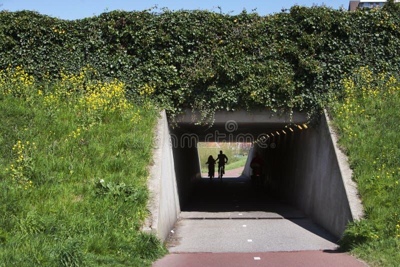 Download Betonowy rowerowy tunel obraz stock. Obraz złożonej z krzak - 53781171