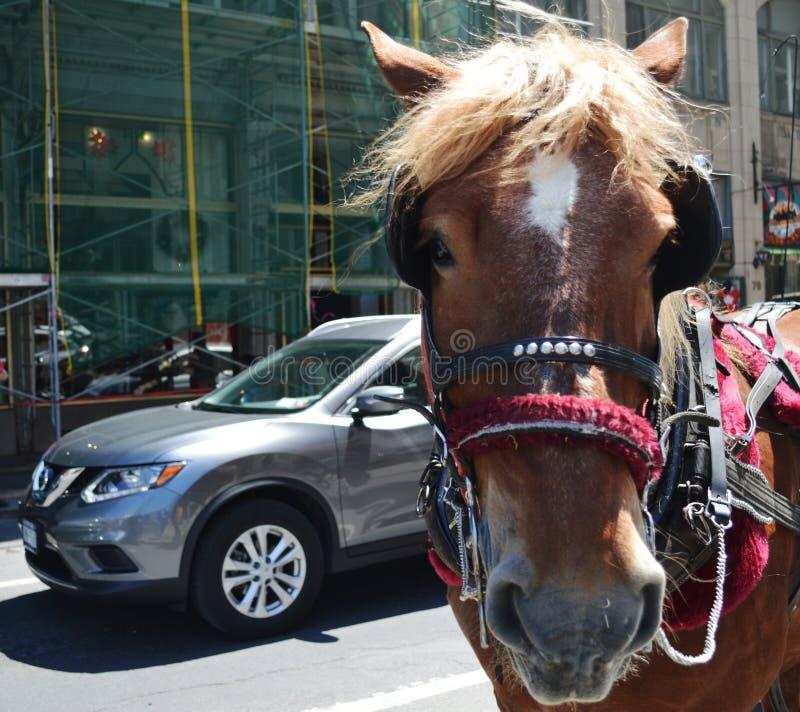 Betoverend Paard royalty-vrije stock foto's
