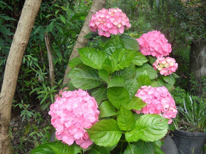 betoverende bloemen in de groene aard royalty-vrije stock afbeelding