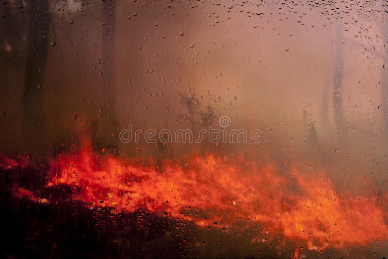 Betrachten Sie das Feuer im Wald lizenzfreie stockfotografie