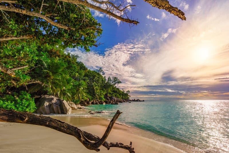 Betrachten von throug Niederlassungen Paradiesstrand anse Georgette, praslin Seychellen 6 lizenzfreies stockbild